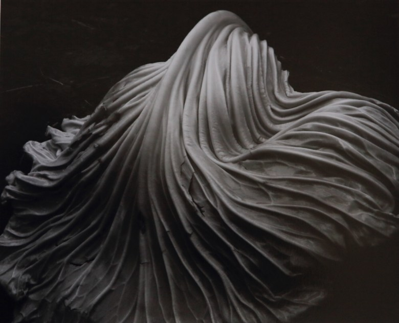 Cabbage composition by Edward Weston