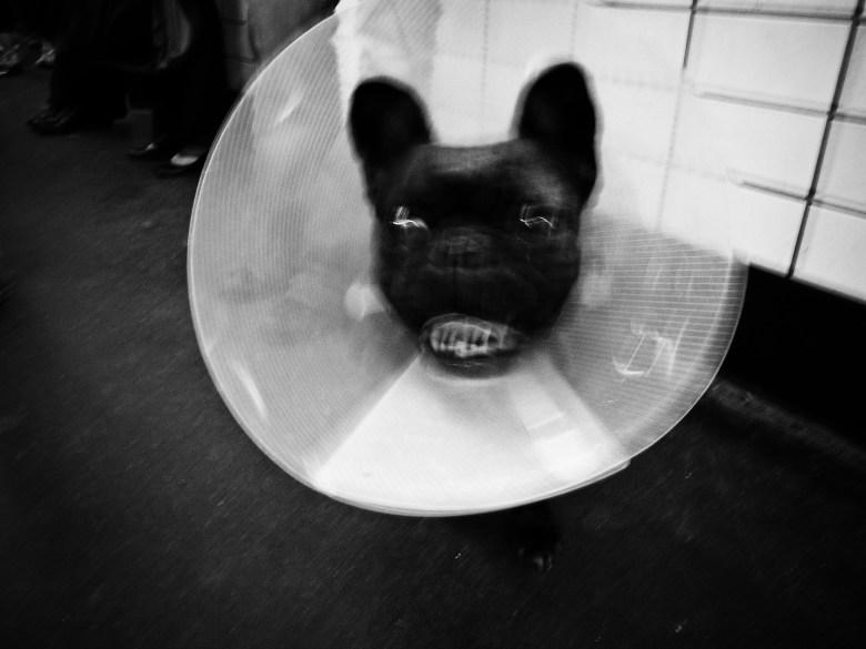 Grimace dog. Paris, 2011