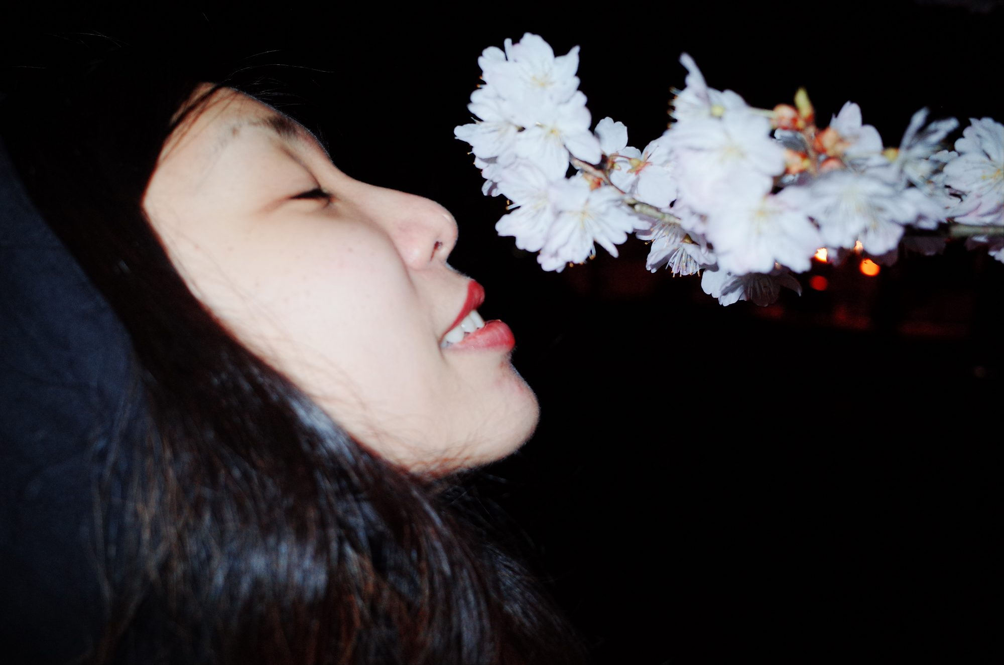 Cindy sniffing cherry blossoms. Uji / Kyoto, 2018