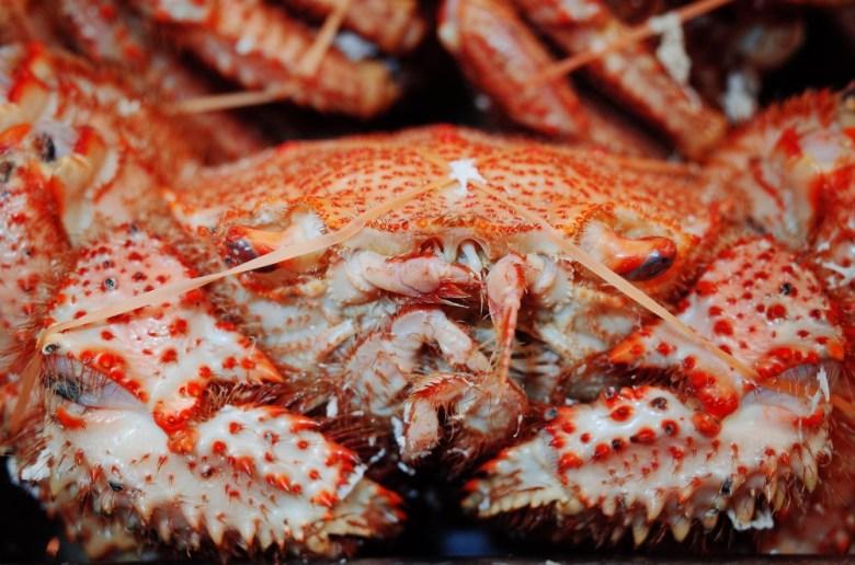 Eric Kim Osaka Crab Closeup.jpg
