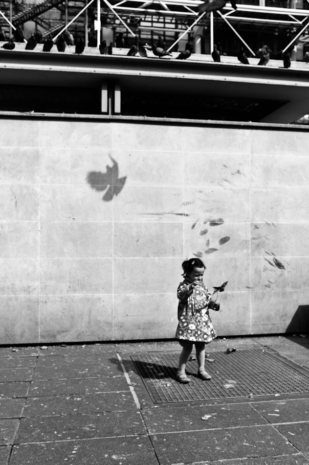Shadow bird. Flight. Paris, 2011