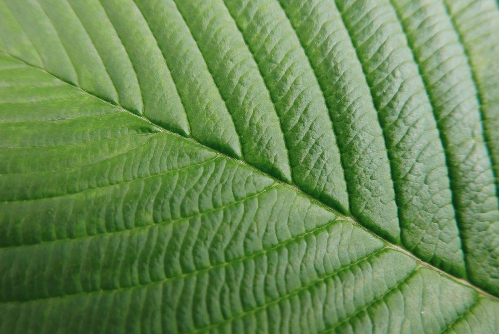 Leaf closeup macro