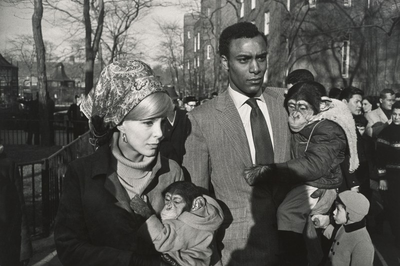 Gary Winogrand, Central Park Zoo, New York, 1967.