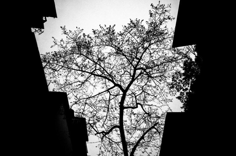 Tree Hanoi
