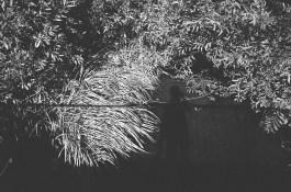 eric kim photography black and white tri x 1600 leica mp 35mm film-80080023