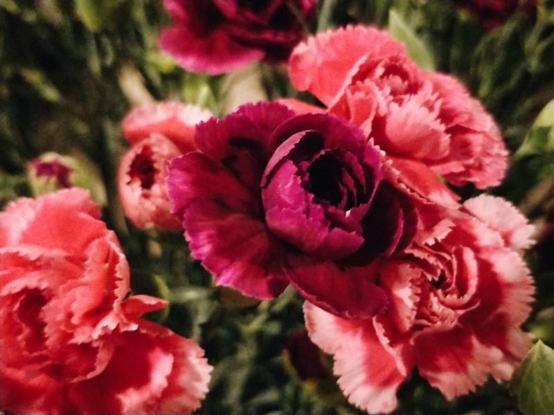 Flower dalat