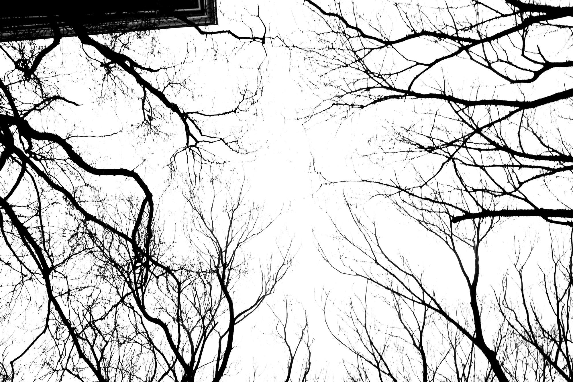 trees upward
