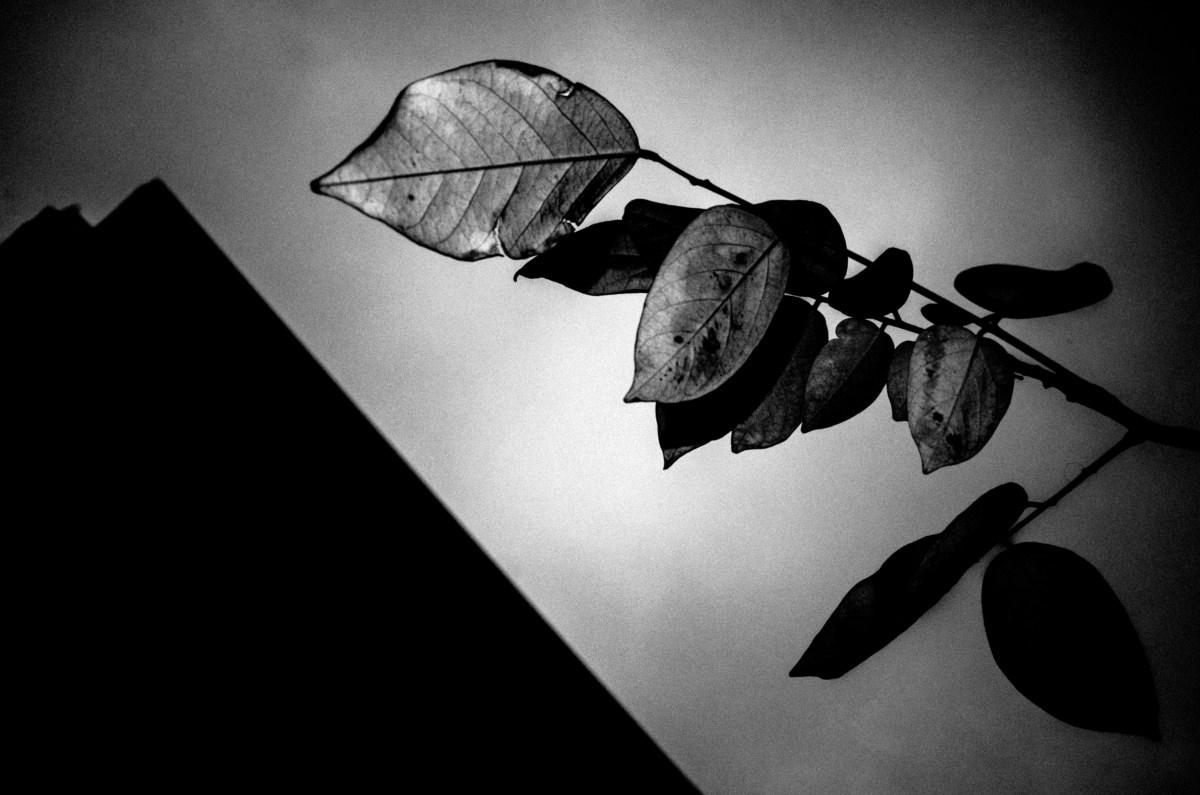 Leaf with flash. RICOH GR II. Hanoi