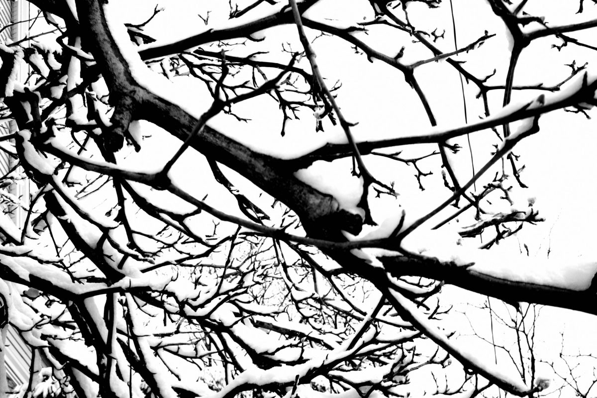 Tree pick snow