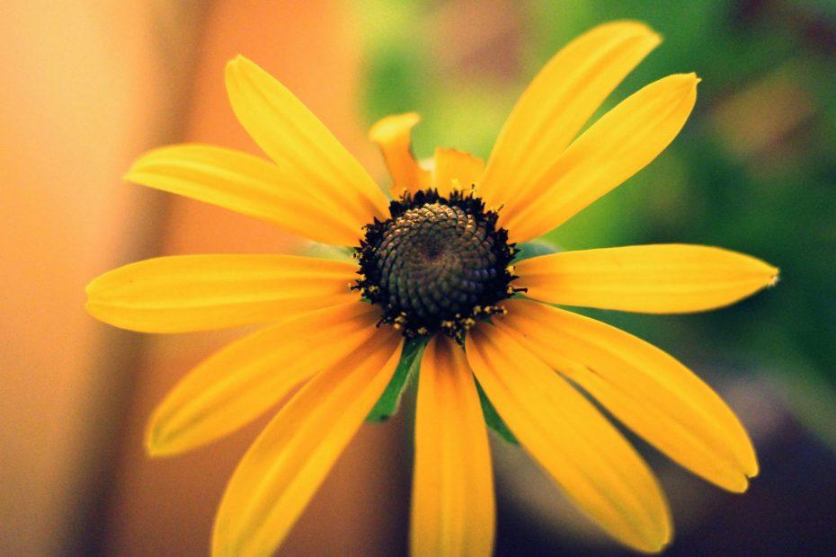 flower eric kim photography providence ricoh griii jpeg cross process 00061