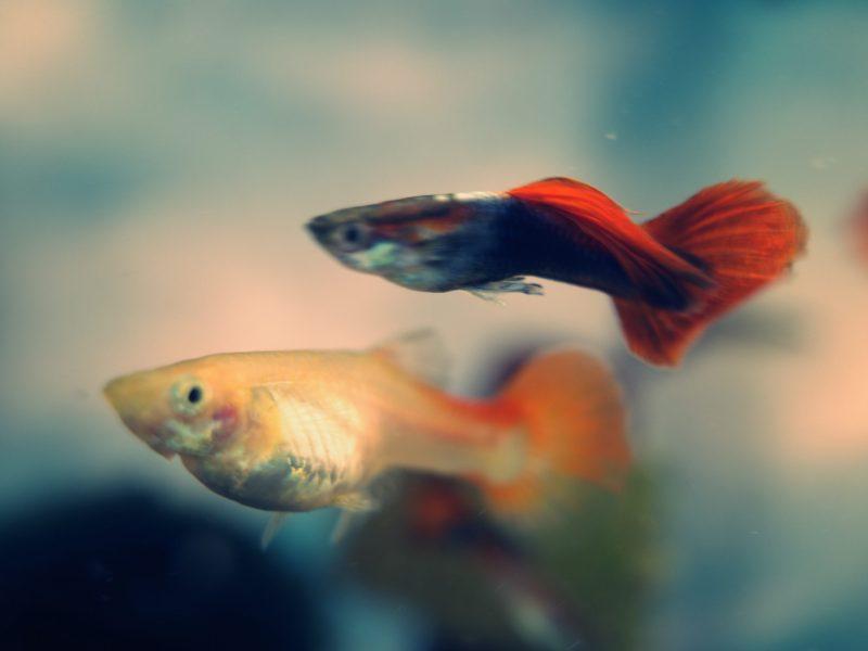 fish ERIC KIM