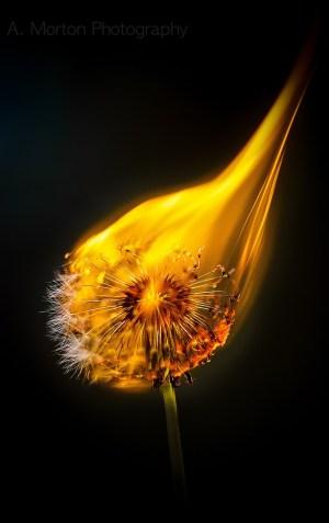 """The Dandelion Lesson"" – A Poem By Erick Mertz"