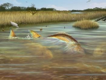 Redfish in the salt marsh of Louisiana, Texas and Carolina