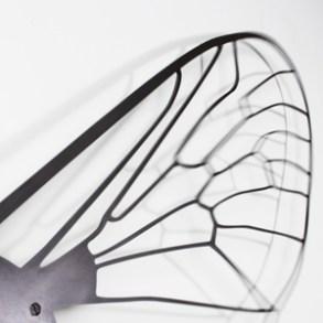 © Eric Le Maire, Les ailes de mouche, son, vibration (photo © Cécil Mathieu)