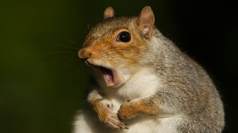 squirrel recipes