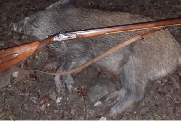 flintlock wild boar