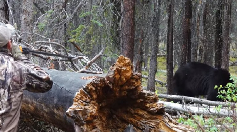 blowgun bear hunt