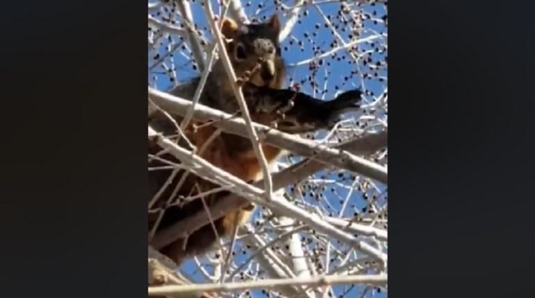 squirrel eating bird