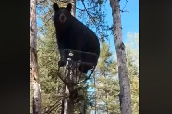 bear in treestand