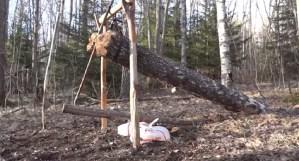 deadfall trap