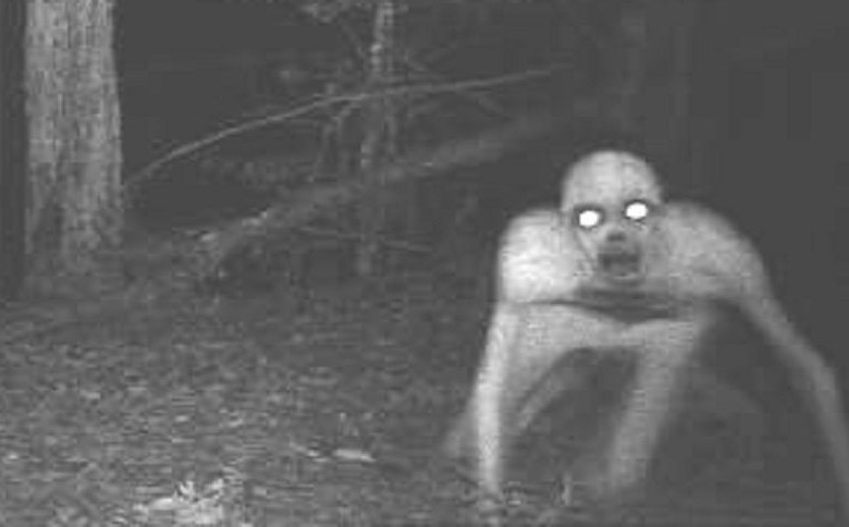 CAUGHT ON GAME CAMERA: IMAGES THAT MIGHT KEEP YOU OUT OF THE WOODS