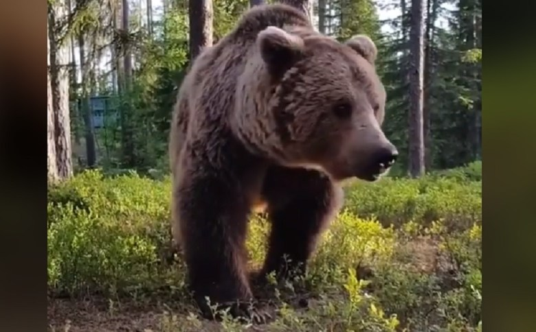 HUGE BEAR VISIT: WHAT WOULD YOU DO? (VIDEO)