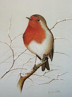 Eric Peake An International Celebration Of Bird Art