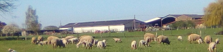 Découvrez l'histoire de Sylvain Bernard, devenu éleveur d'agneaux