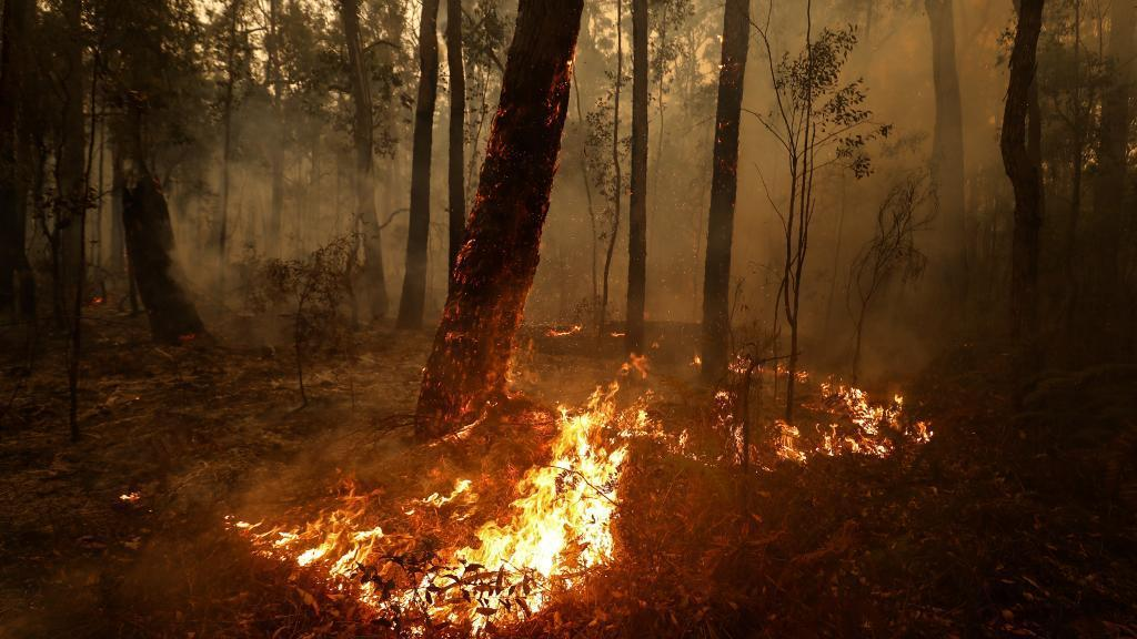 Small spot fires still burn between Orbost and Cann River along the Princes Highway. Picture: Darrian Traynor