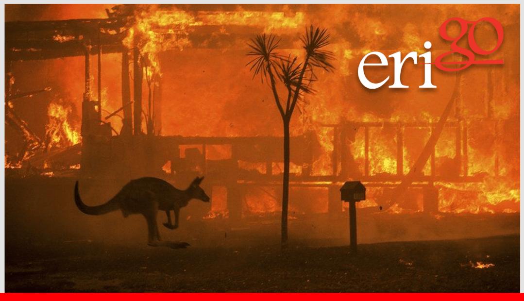the victorian bushfire appeal kangaroo