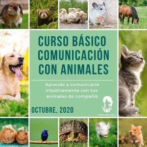 Curso Básico de Comunicación con Animales Octubre 2020