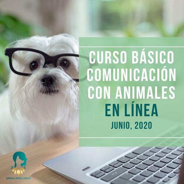 Curso Básico de Comunicación con Animales en Línea Junio 2020