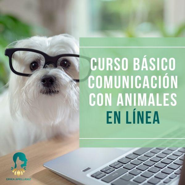 Curso Básico de Comunicación con Animales En Línea