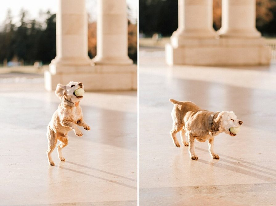 Dog photos in the Cheesman Park pavilion