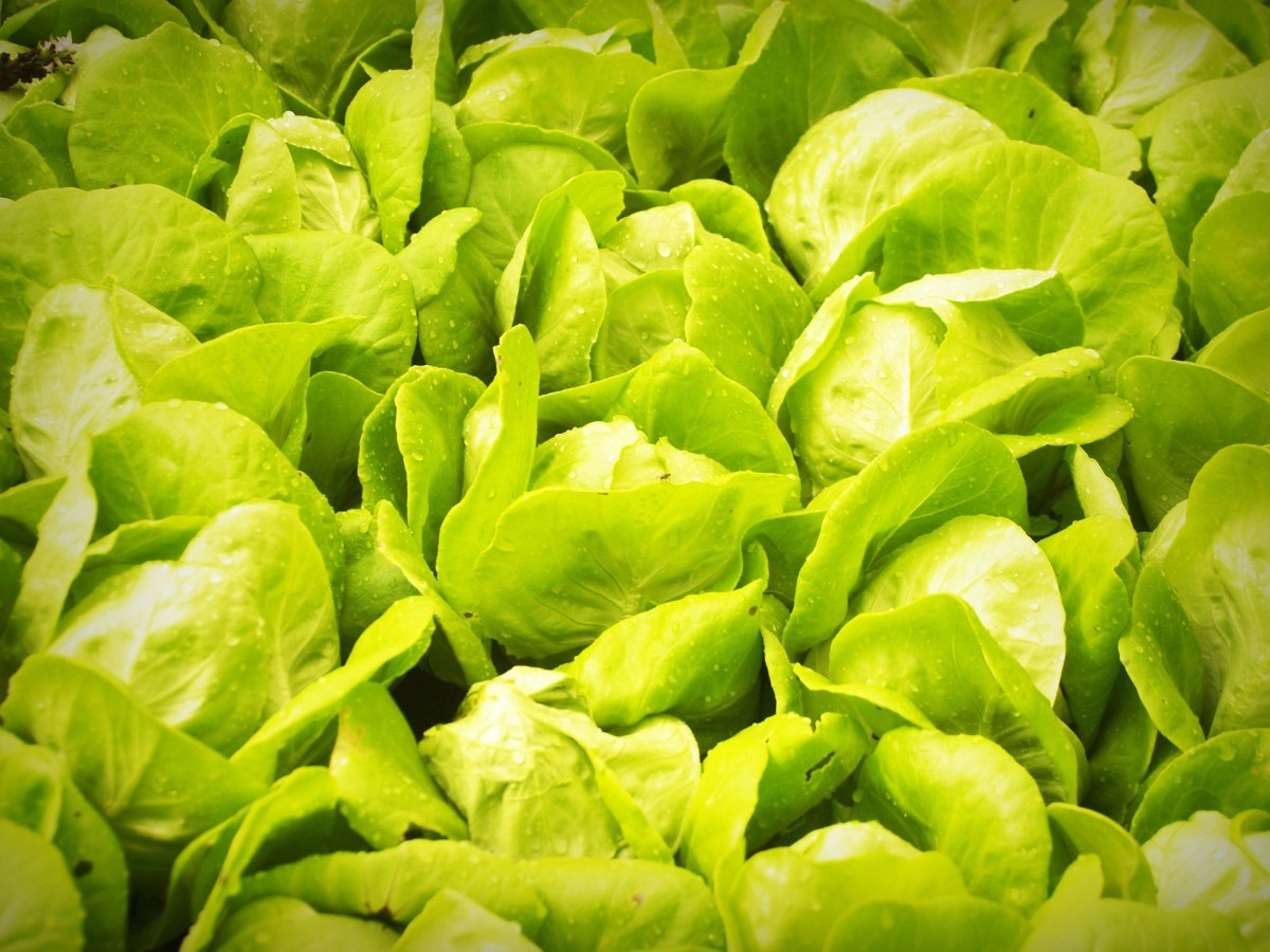 Cameron Highlands - Vegetable Farm
