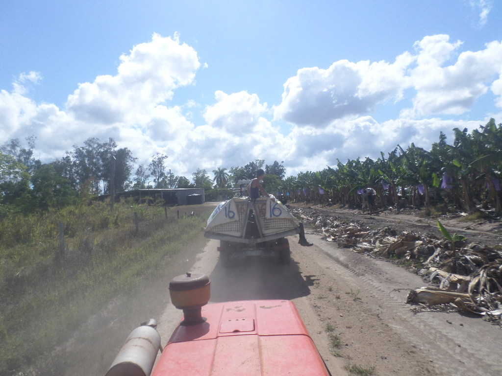 Cairns - Tractor Driving PIC: TM