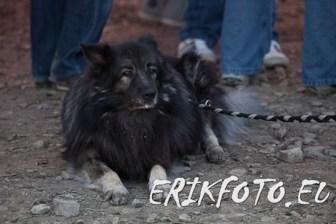 erikfoto.eu0042