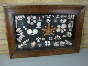 Vintage shadow box of seashells