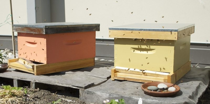 We have beehives on the roof!