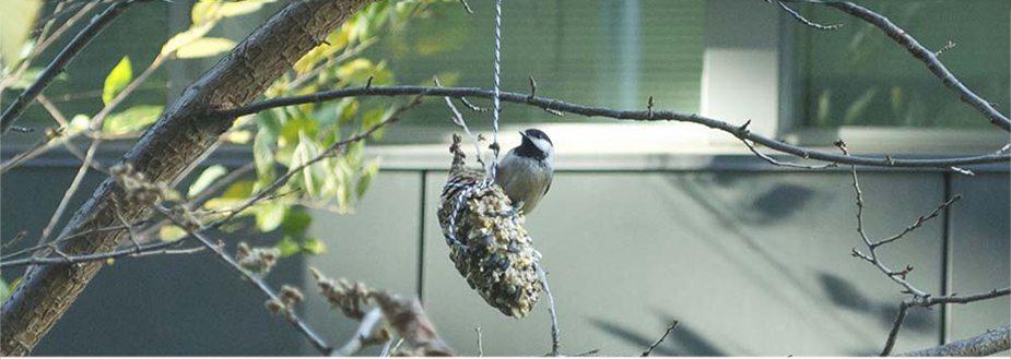 pinecone bird feeder SS
