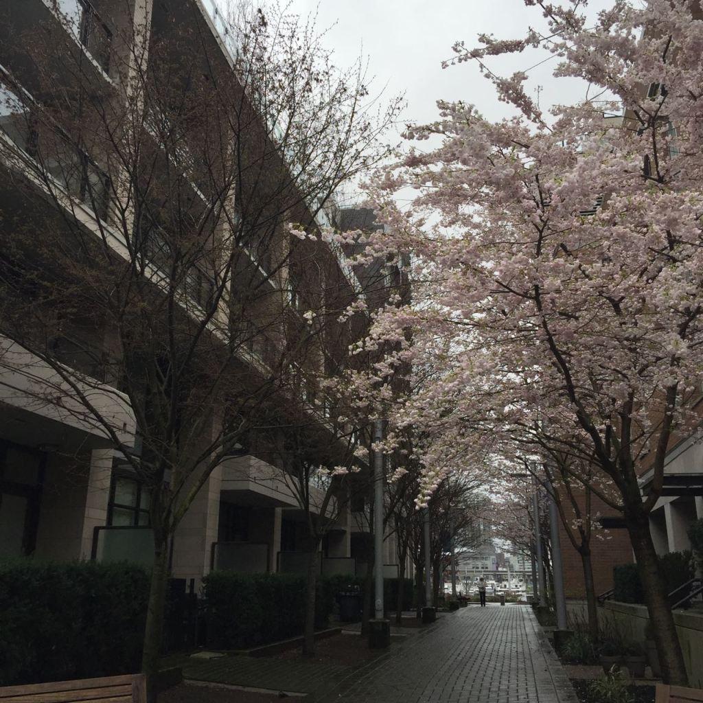 Sakura time!