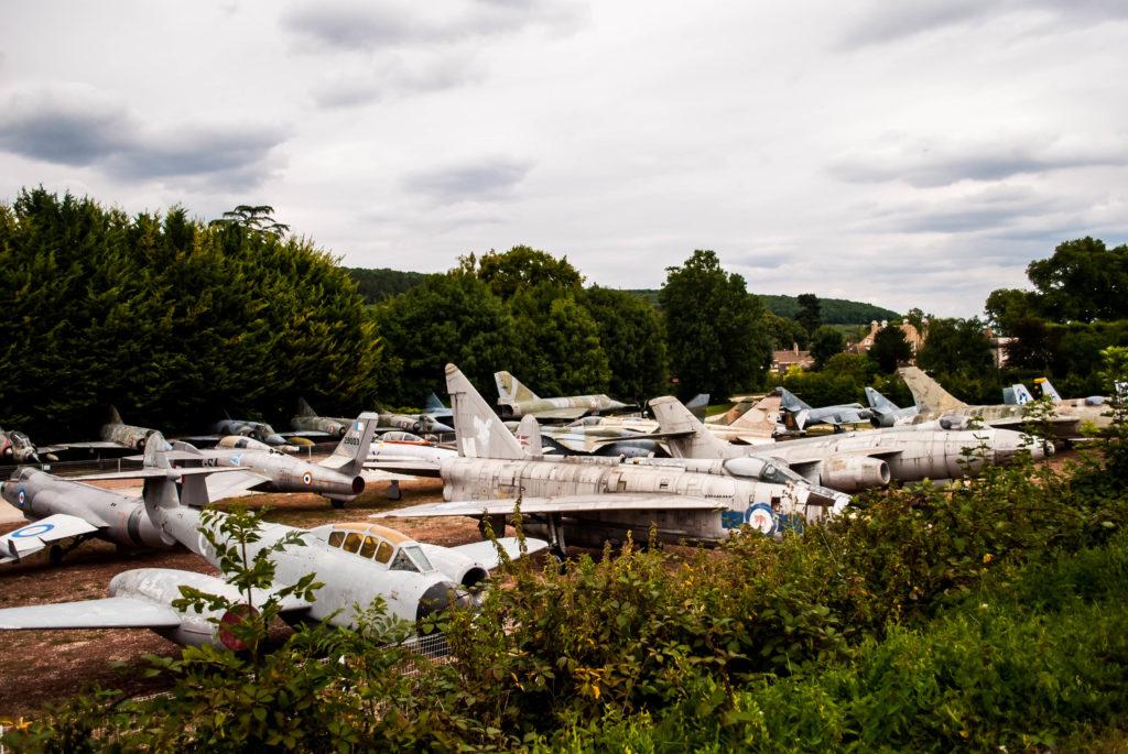A field of planes at Château de Savigny-les-Beaune