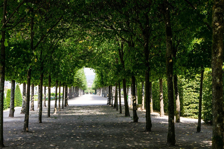 Beautiful tree tunnel in Schlossgarten Schwetzingen
