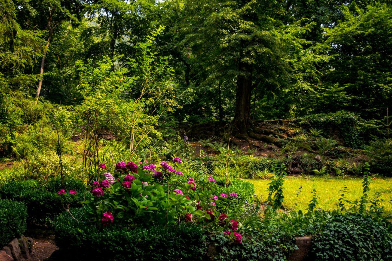 Burg Berwartstein garden 3