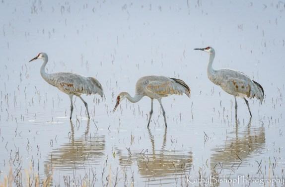 3 cranes photo