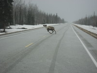 Alaska_070