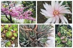 Cactus + flowers! The Royal Botanical Garden in Burlington in May.