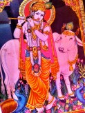Krishna playing flute with sacred cow