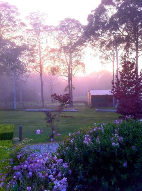 Morning Mist Bilpin Springs