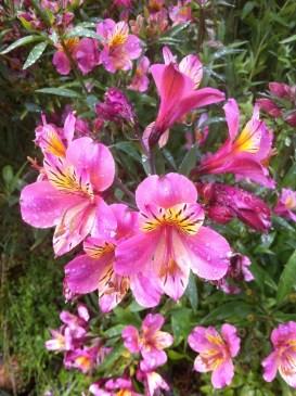 Flowers in Christine's Garden